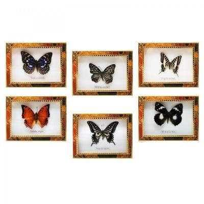 Пеперуда в рамка
