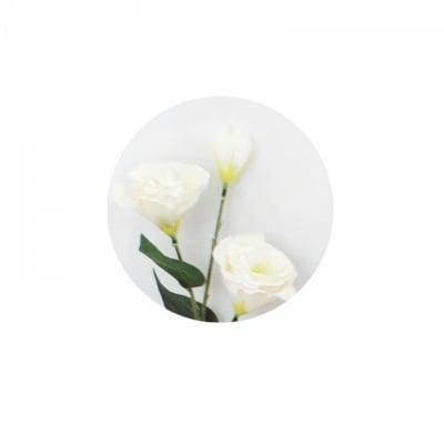 Цвете - Еустома №1