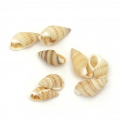 Морски раковини 10~14x5~7 мм цвят бял , перу -50 грама
