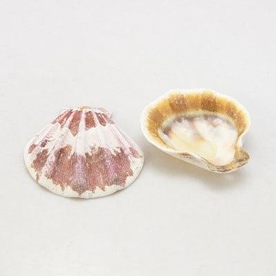 Морски раковини (мида) 39~45x37~42x6~7 мм дупка 2 мм 9~12 броя ~50 грама