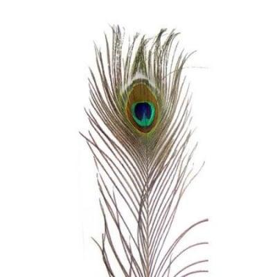 Пера паунови 90-100 см