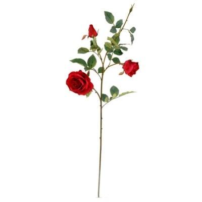 Роза червена
