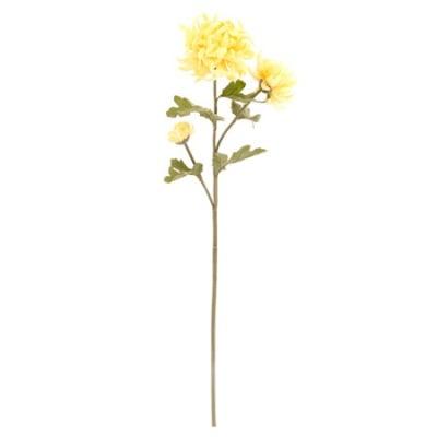 Хризантема жълта