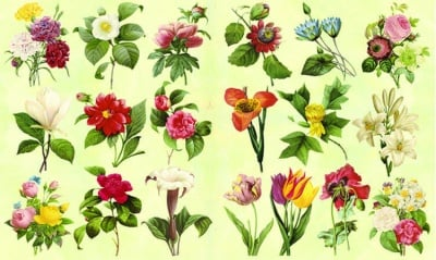 Декупажна хартия, 60 gr/m2, 33 x 48 cm, 1л, Градински цветя