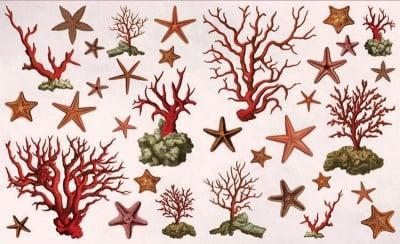Декупажна хартия, 60 gr/m2, 33 x 48 cm, 1л, Морски звезди и корали