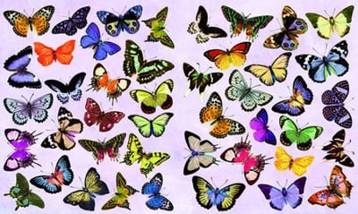 Декупажна хартия, 60 gr/m2, 33 x 48 cm, 1л, Пеперуди
