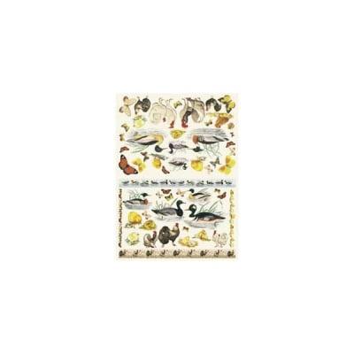 Декупажна хартия с мотиви, 40 g/m2, 50 x 70 cm, 1л, Пернати