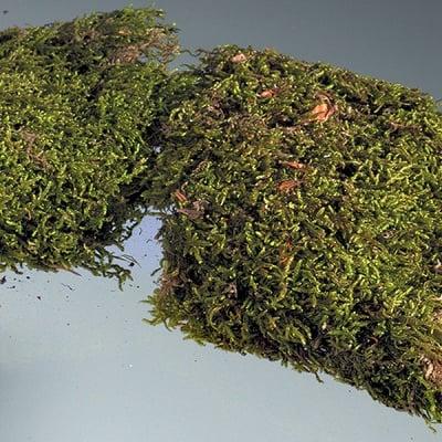 Мъх, натурален, Plattenmoos, 30 g, зелен
