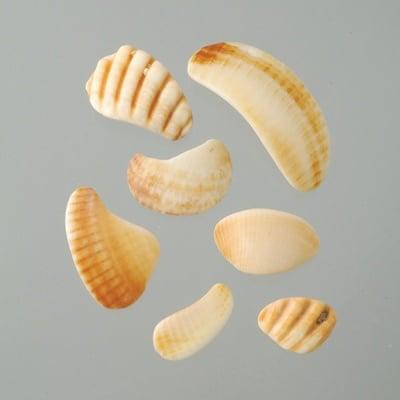 Парченца мидени черупки, 20 - 50 mm, 500 g, естествено бели