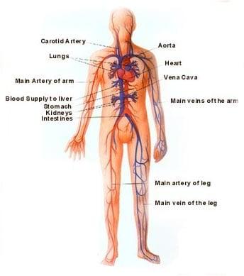 Циркулационните канали (сроти)