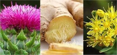 3 билки, които водят в битката с процесите на стареене