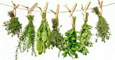 9 билки, които подобряват концентрацията и стимулират ума