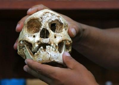 Малките хора от остров Флорес - факт или научна мистификация