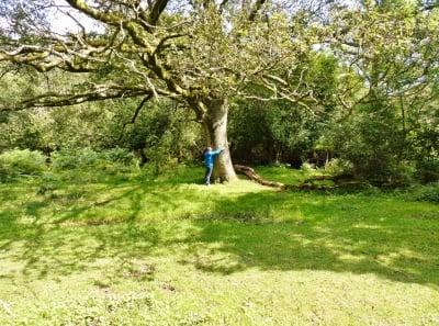 Науката доказа, че прегръщането на дървета е полезно за здравето