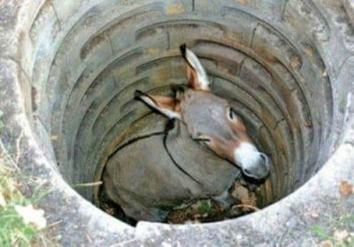 Приказка за старото магаре и прошката