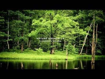 Nature Sound 16