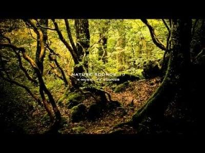 Nature Sound 17