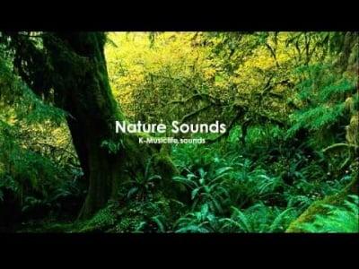Nature Sound 4