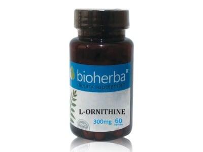 L-ОРНИТИН 300 мг. - за по-бързото възстановяване при наранявания - 60капс.