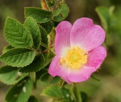 Подсъзнателно въздействие на миризмите