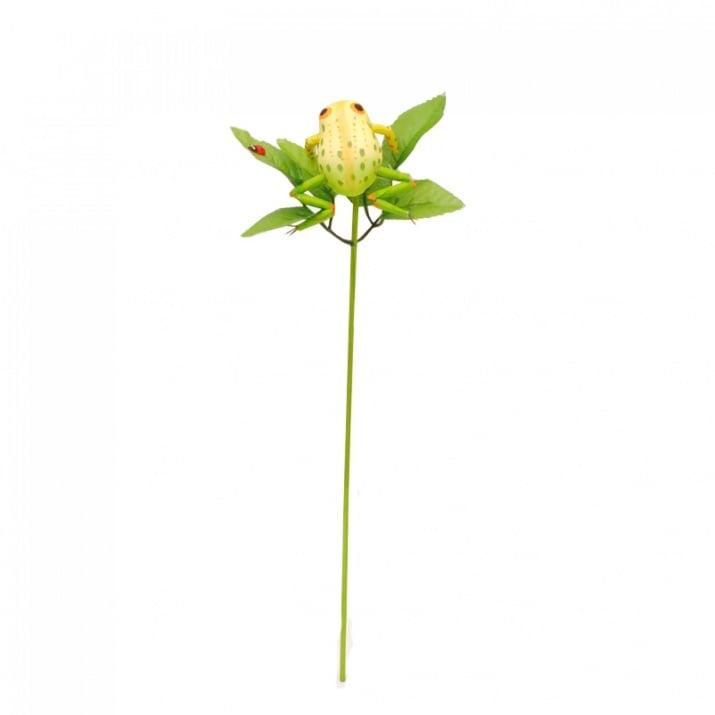 Жабка на листо