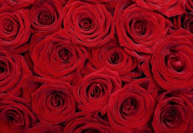 Декупажна хартия, 60 gr/m2, 33 x 48 cm, 1л, Рози
