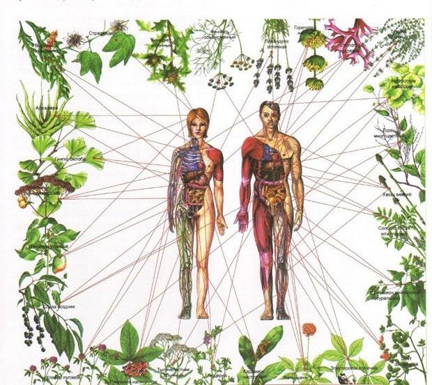 Лечение на чакрите с билки