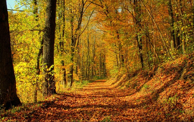 Нумеролого-психологичен хороскоп за месец Октомври 2014