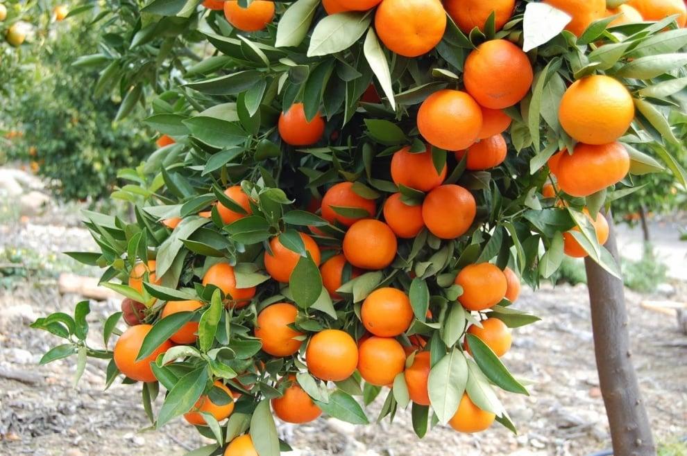 Kакви ползи за здравето носят портокалите?