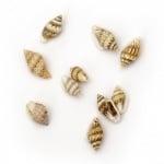 Морски раковини 7~12x3~7 мм цвят бял , кафяв -50 грама