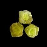 Роза тюл 25 мм. св.зелена -10 броя