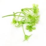 Растение за декорация цвете 70x35 мм - 4 клонки