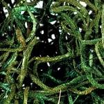 Мъх от Джунглата, Jungle moss, 25 g, зелен