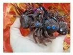 Гумен паяк - силикон - 1 брой