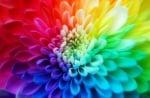 Лечение с цветове