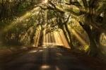 Лечебната сила на дърветата - Установяване на духовна връзка