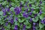 Някои от най-добрите лечебни растения в природата