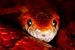 Притча за змията и човешката природа