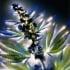 Лечебни енергии и ароматерапия